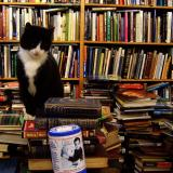 Cat by lots of books