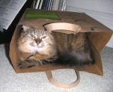 A cat in a bag