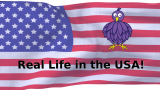 American flag, Bibliobird logo and text 'Real Life in the USA'