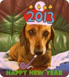 Dog with 2013 hat